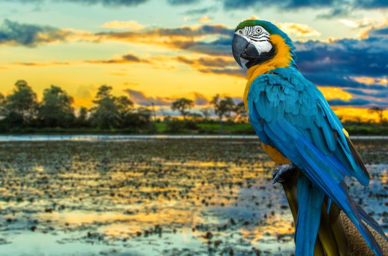 Pantanal – Mato Grosso